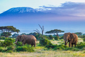 Photograph of African savannah with elephants