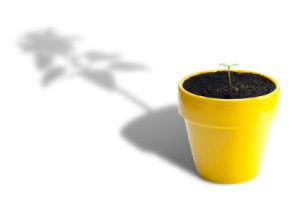 picture of a tiny seedling in a flowerpot - throwing a big plant's shadow
